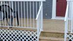 cedar-deck-aluminum-railing